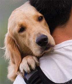 The dog owner will insist that his pet was as gentle as a spring breeze, despite a documented history of violence.