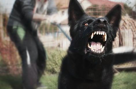 Bad Dog? No, Bad Dog Owner …